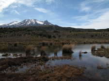 Old Blyth Track - Tongariro National Park - New Zealand