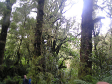 Old Maori Trail - Te Urewera National Park - New Zealand