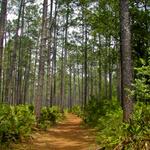 Olustee Battlefield Trail