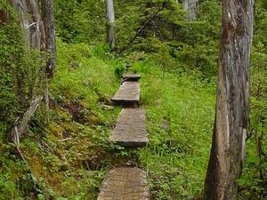 Un pato Trail