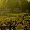 One Of Oak Glen's Apple Orchards