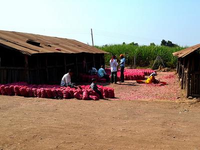 Onion Farm Town