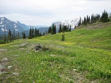 On Siyeh Bend Cut-Off Trail - Glacier - Montana - USA