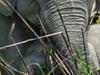 Orang National Park Elephant Safari
