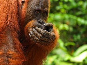 3 Days Orangutan Tour at Tanjung Puting National Park Photos
