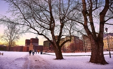 Oslo Public Garden - Winter View