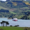 Otago Peninsula Coastline NZ