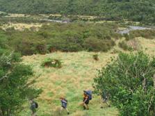 Otaki Forks - North Island - New Zealand