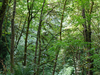 Otapukawa Hut To Otane Hut Track - Te Urewera National Park - New Zealand