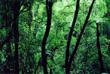 Otawa Scenic Reserve - North Island - New Zealand