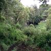 Overgrown Track @ Mt Elgon National Park UG&KE