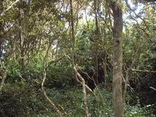 Olivillos Forest