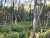 Tregole National Park
