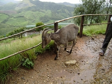 Munnar Views 09
