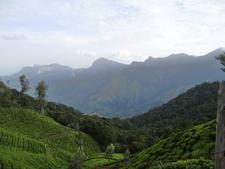 Munnar Views 11