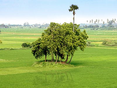 Paddy Fields Around Tirunelveli Palayamkottai Area