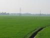 Paddy Fields Of Kuttanad