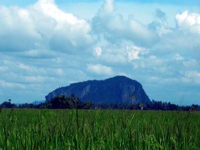 Padi Fields Kedah