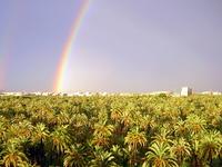 Palm Grove de Elche