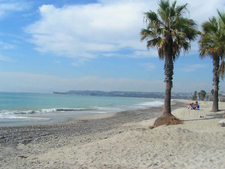 Palms Trees At Capistrano Beach