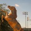 Palomino Statue At Laredo Community College