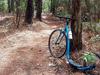 Palo Verde Trail 512 - Tonto National Forest - Arizona - USA
