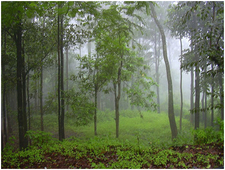 Panchgani-Fog