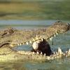 Papikonda Wildlife Sanctuary