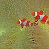 Papua Province - Raja Ampat Scuba Diving