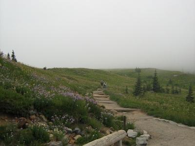 Paradise On A Foggy Day
