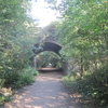 Parkland Walk With The Crouch Hill Bridge