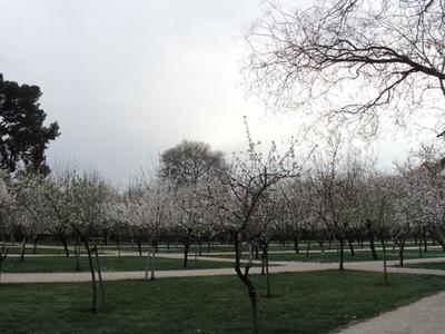 Parque Del Buen Retiro Spring Flowers