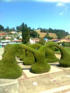 View Of Parque Francisco Alvarado