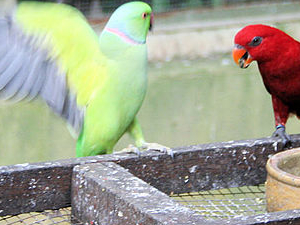 Kuala Lumpur Bird Park