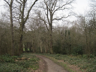 Path In Scadbury Park