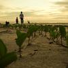 Peliau Beach