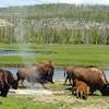 Pelican Valley - Yellowstone - USA