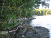 Pemaquid River Maine