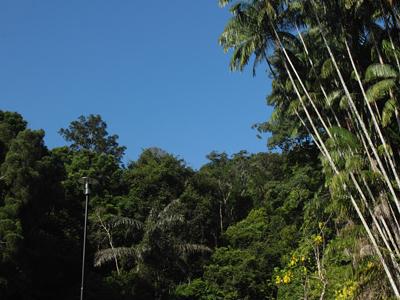 Penang Botanic Gardens - Penang