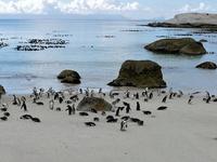 Cape of Good Hope & Penguins Tour
