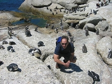 Penguins At Cape Of Good Hope SA