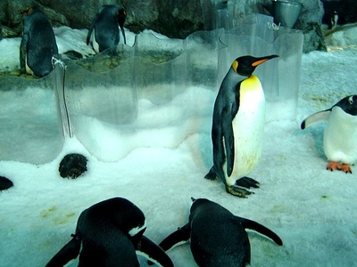 Penguins In The Former Antarctic Encounter
