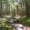 Perkins Trail