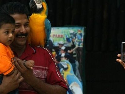 Photography Session - Bird Shows