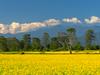Picnic To Bhalukpung - Nameri