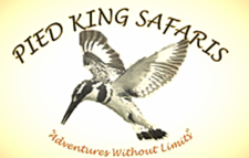 Pied King Safaris