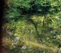 Pigg River