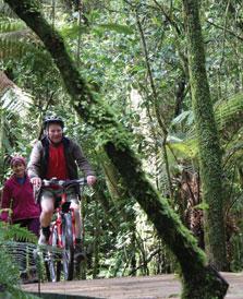 Pikiariki To Mountain Bush Edge Bike Trail - Whanganui National Park - New Zealand