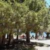 Pine Point Picnic