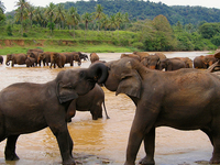 Visit Sri Lanka With Us For Memorable Holidays